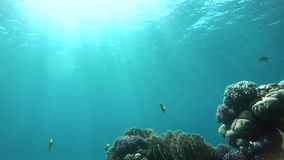 World, The corals and fish. stock video footage