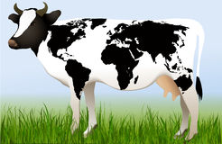 World cow Royalty Free Stock Photography