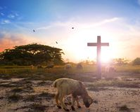Resurrection concept: the Lamb of God in front of the cross of Christ Jesus. World environment day concept:beautiful meadow wallpaper background Royalty Free Stock Images