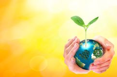 World environment day concept: human hands holding big growth tree and earth globe over sunny yellow spring background. World environment day concept: human stock photos
