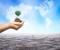 World environment day concept: Human hands holding big tree over green forest background stock photography