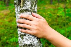 World Environment Day. The girl hands hugging a tree trunk. To hold the birch. The concept of unity with nature. Draw strength fro Royalty Free Stock Images