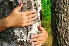 World Environment Day. The girl hands hugging a tree trunk. To hold the birch. The concept of unity with nature. To draw strength from nature Royalty Free Stock Images