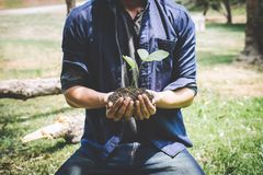 World environment day reforesting, Hands of young man were planting the seedlings and tree growing into soil while working in the. Garden as save the world stock image