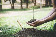 World environment day reforesting, Hands of young man were planting the seedlings and tree growing into soil while working in the. Garden as save the world royalty free stock image