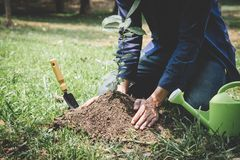 World environment day reforesting, Hands of young man were planting the seedlings and tree growing into soil while working in the. Garden as save the world stock images