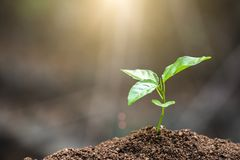 The World Environment Day,  Young plant growing on fertile soil with  drop over green and morning sunlight environment. The World Environment Day, Young plant stock images