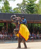 World famous elephant show in Nong Nooch tropical garden in Pattaya, Thailand. Royalty Free Stock Image
