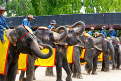 World famous elephant show in Nong Nooch tropical garden in Pattaya, Thailand. Royalty Free Stock Images