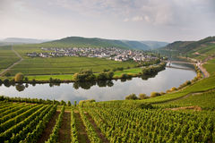 World famous sinuosity at the river Mosel near Trittenheim Royalty Free Stock Photography