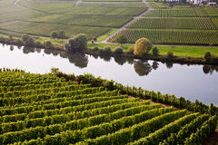 World famous sinuosity at the river Mosel near Trittenheim with Royalty Free Stock Photo