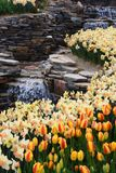 World famous Tulip Festival in Emirgan Park, Istanbul, Turkey. Flowering of tulips. World famous Tulip Festival in Emirgan Park, Istanbul, Turkey. Flowering of stock photography