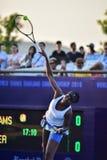 World female Tennis Player Venus Williams Royalty Free Stock Photos