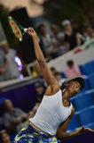 World female Tennis Player Venus Williams Stock Photo