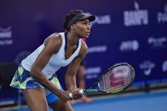 World female Tennis Player Venus Williams Royalty Free Stock Image