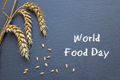 World Food Day, October 16, chalkboard with cereal and text Stock Images