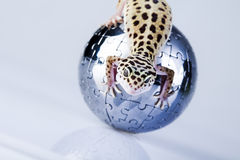 World in gecko Royalty Free Stock Photography