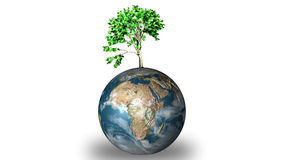 World globe with Plant Royalty Free Stock Photo