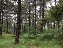 The world of green, fresh forests. royalty free stock photography