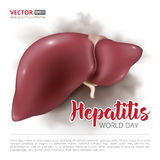 World hepatitis day. Postcard or banner to the world hepatitis day. Vector illustration of human liver isolated on white background Royalty Free Stock Photos