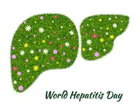 World Hepatitis Day2. World Hepatitis Day. Symbol of a healthy liver, from green grass and flowers. Ecology in the fight against hepatitis. Isolated on white Royalty Free Stock Photo