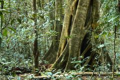 World heritage area lamington national park Royalty Free Stock Photography