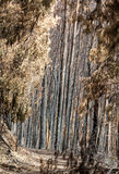 World heritage forests of Madeira terribly destroyed by fires in 2016. Some of trees have enormous will of life and survived this Stock Photo