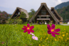 World heritage shirakawago gasshozukuri houses Stock Photos