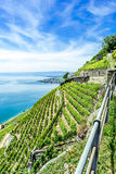 The world heritage site of the Lavaux Vineyards. Royalty Free Stock Image