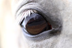 World through the horse eyes Royalty Free Stock Photos