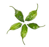 World hottest chillies Royalty Free Stock Images