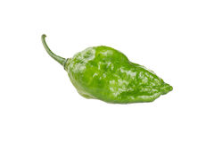 World hottest chillies Royalty Free Stock Photos