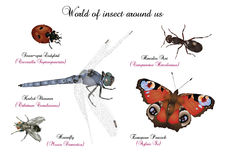 World of insect around us Stock Images