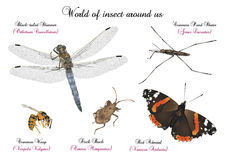 World of insect around us Stock Photo