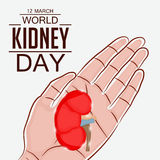 World Kidney Day Stock Images