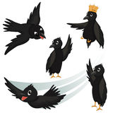 Crows Vector Illustrations Royalty Free Stock Images