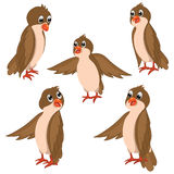 Brown Birds Vector Illustrations Set. 
