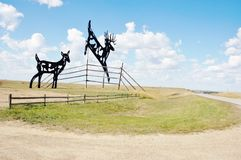 World largest deers  from north dakota Stock Photo