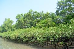 World Largest Mangrove forest in Bangladesh nearby a beautiful river. Use it your personal and business. Where you get a real surrendered sundarbone picture Stock Photo