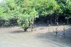 World Largest Mangrove forest in Bangladesh nearby a beautiful river. Use it your personal and business. Where you get a real surrendered sundarbone picture Royalty Free Stock Images