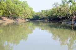 World Largest Mangrove forest in Bangladesh nearby a beautiful river. Stock Image