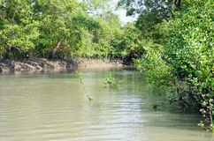 World Largest Mangrove forest in Bangladesh nearby a beautiful river. Stock Photography