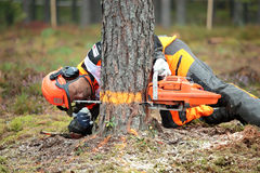 World logging championship 2012 Stock Photos