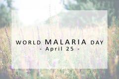 World Malaria Day concept. Banner World Malaria Day concept Stock Photos