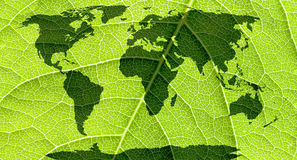 World map. World map, continents in green leaf background Royalty Free Stock Images