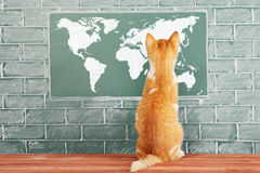 World map. Education funny idea with red cat before blackboard with World map Royalty Free Stock Photos