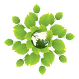 World map and leaf. Grounded on a white background seedlings. world map and tree leaves Royalty Free Stock Image