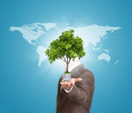 World map and man hold bulb with tree Royalty Free Stock Photo