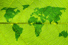 Map on leaf Stock Photo