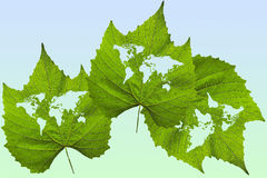 Three leaves with world map Stock Photos